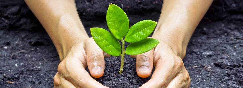 Cuidando el medio ambiente. Manos plantando una planta sobre tierra oscura.