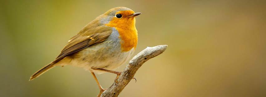 Pájaro pequeño de color marrón, naranja y gris situado encima de una rama.